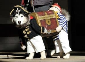 Dog Pirate Chest Costume