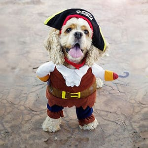 Pirate Dog Costume Xl