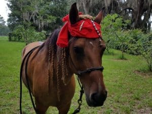 Pirate Horse Costume