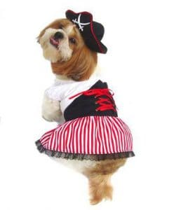 Puppy Pirate Costume